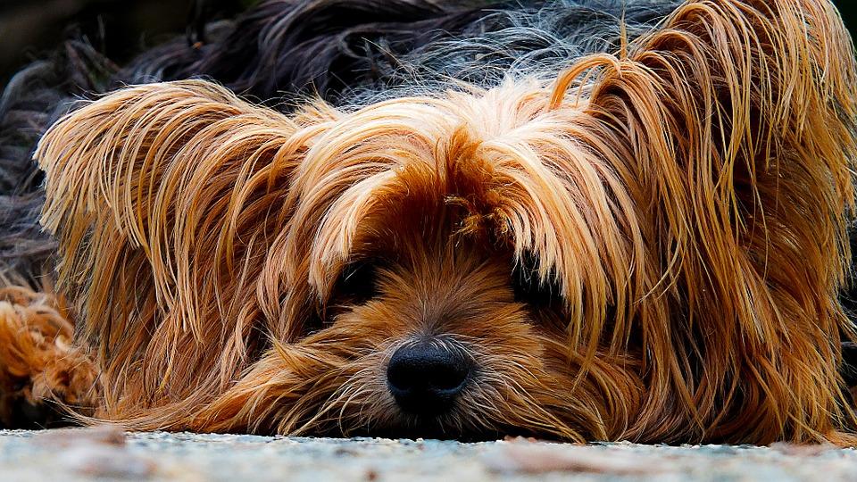 lichaamstaal hond