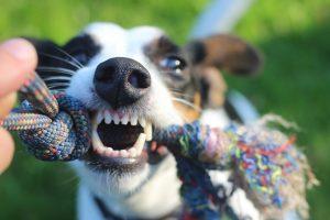 hondenspeeltjes-voor-goede-tanden