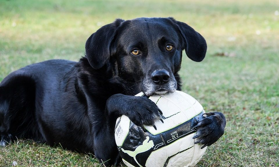 Je hond aan het spelen krijgen